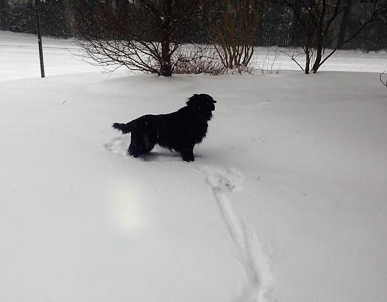 molly-in-snow-2014